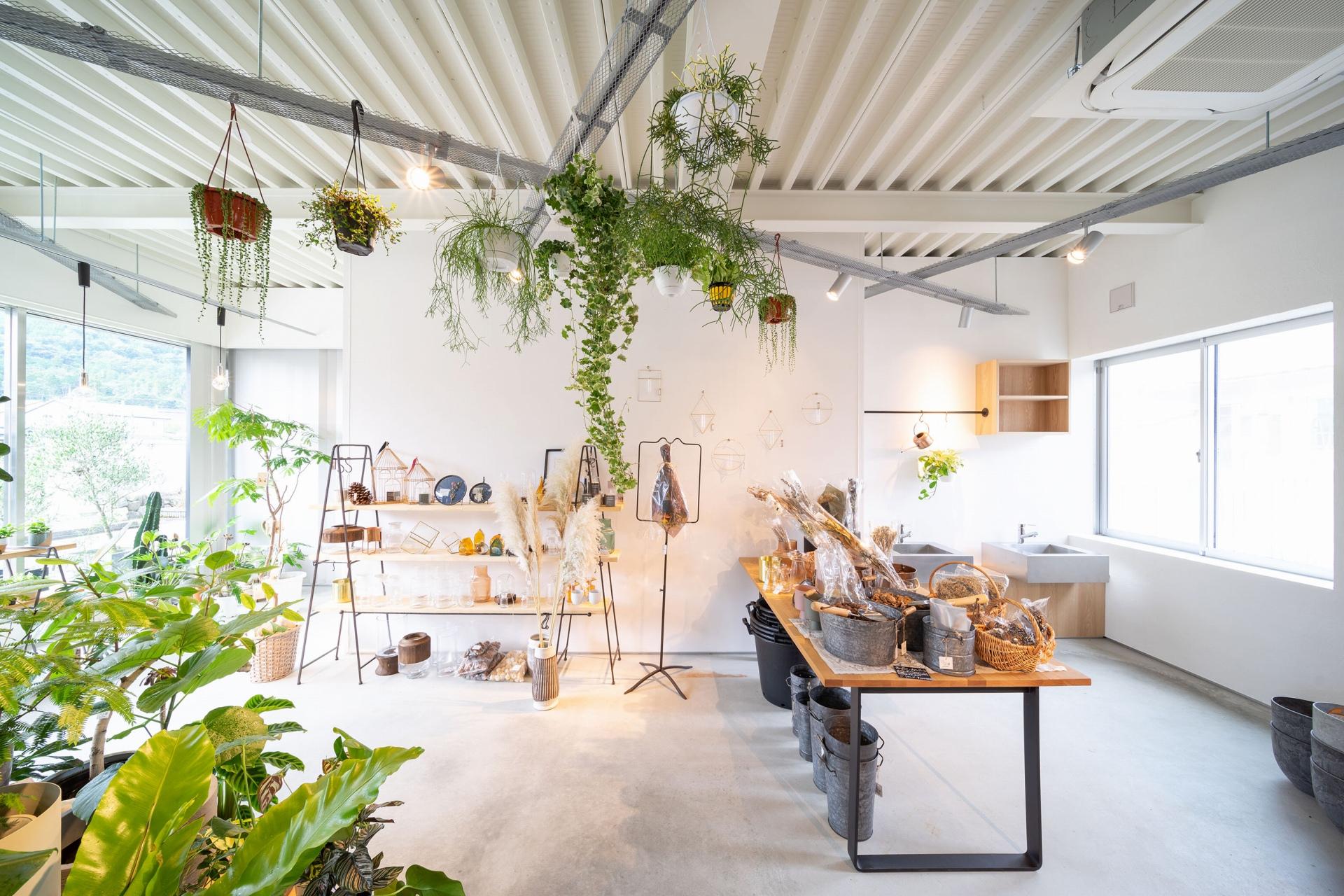 人も植物も心地のいい観葉植物のお店